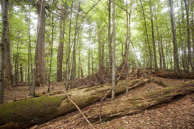 Romania Risks Losing 500,000 Hectares of Forest!
