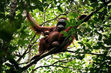 Borneo wildlife | WWF