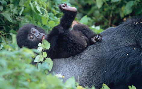 Wildlife Programme | WWF | 472 x 296 jpeg 28kB