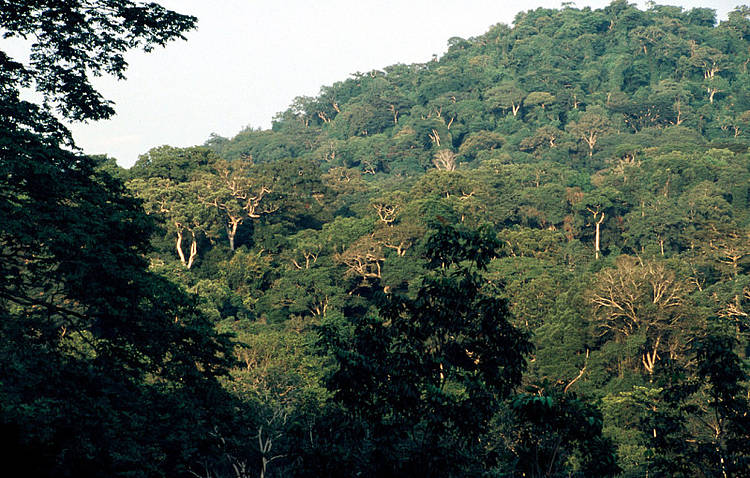 WWF promotes Sino-African green development, contributes to China and Gabon forestry agreement