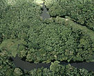 Aerial view of the Varzea flooded forest during the rainy season between the Amazon river and the Rio Negro in Amazonas, Brazil.