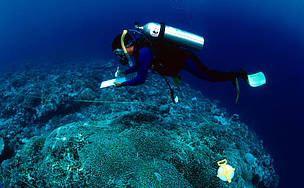 WWF researcher monitoring coral reef Sulu Sea, Tubbataha reef Philippines