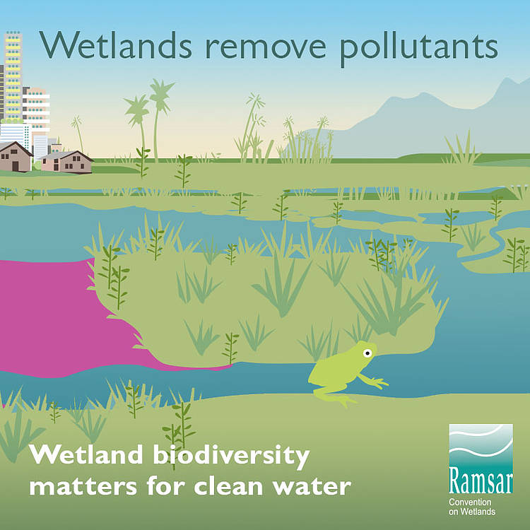 Working with Nature to Reduce Climate Risk in Europe on World Wetlands Day
