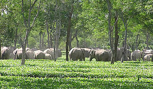 Human Elephant Conflict Wwf