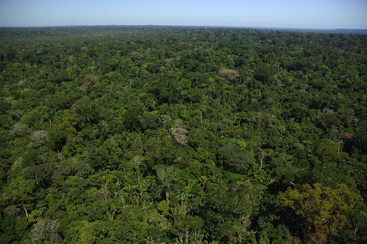 More than pledges needed for real action on forests