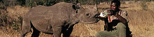 Black rhinoceros (Diceros bicornis). An orphan whose mother was killed by poachers in Zimbabwe